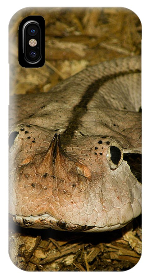 Snake IPhone X Case featuring the photograph Lower Than Low by Trish Tritz