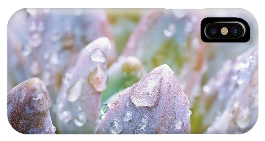 Bead IPhone X Case featuring the photograph Macro Succulent With Droplets by MakenaStockMedia - Printscapes