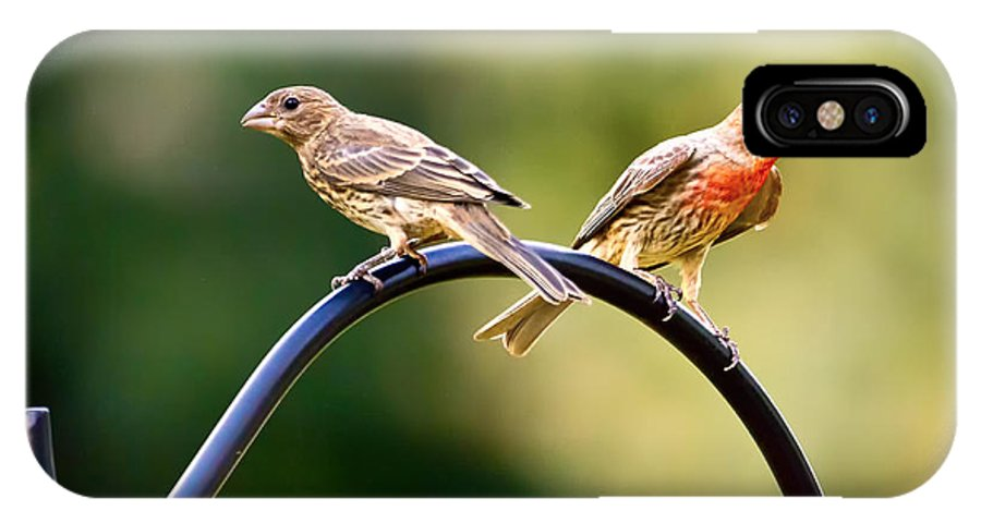 Female House Finch IPhone X Case featuring the photograph Male And Female House Finch by Linda Tiepelman