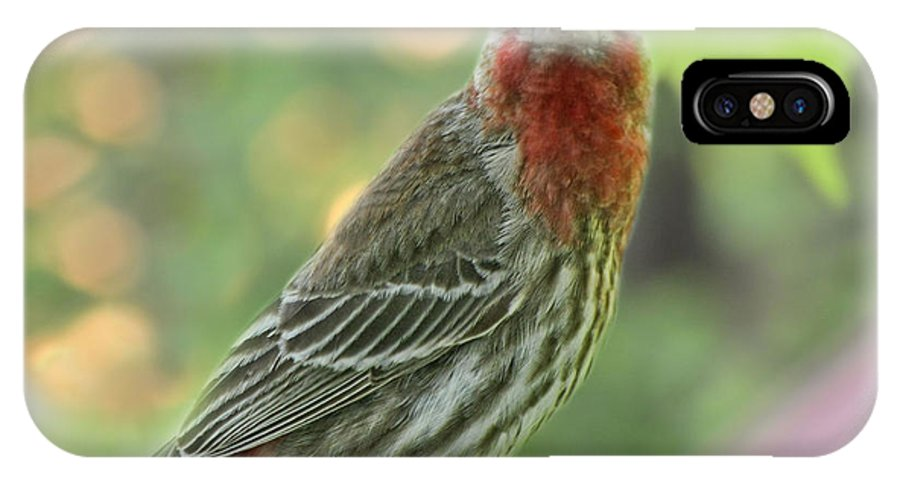 Nature IPhone X Case featuring the photograph Male House Finch by Debbie Portwood