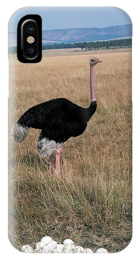 Large IPhone X Case featuring the photograph Male Ostrich With Eggs by Carl Purcell