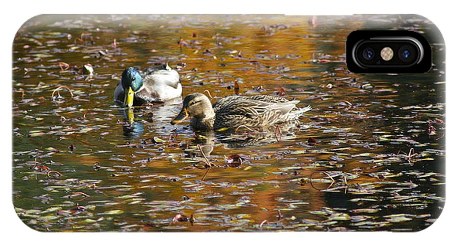 Photography IPhone X / XS Case featuring the photograph Mallards In Autumn by Sean Griffin
