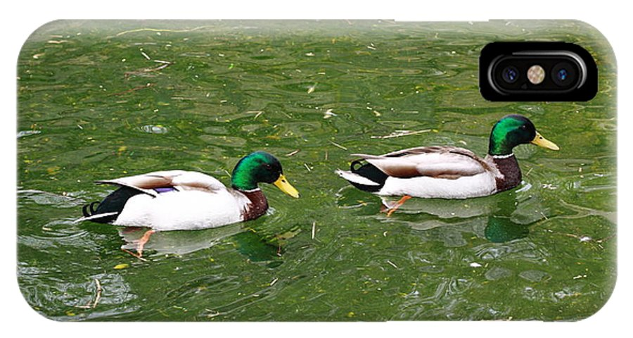 Bird IPhone X Case featuring the photograph Mallards by Paul Slebodnick
