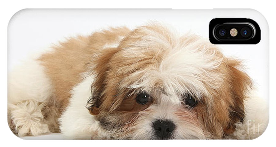 Maltese Shih Tzu Mix Puppy Lying Down Iphone X Case For Sale By Mark