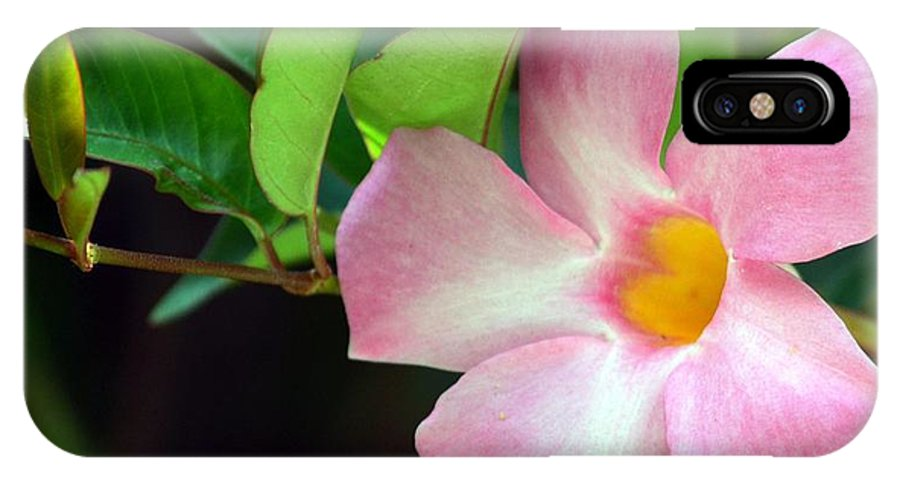 Mandevilla IPhone X Case featuring the photograph Mandevilla Pink by Maria Urso