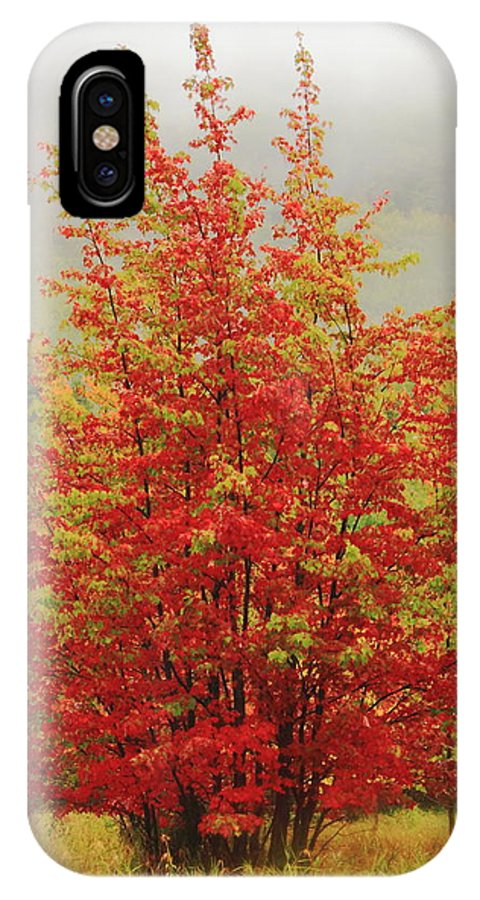 Maples IPhone X / XS Case featuring the photograph Maples In The Mist by Roupen Baker
