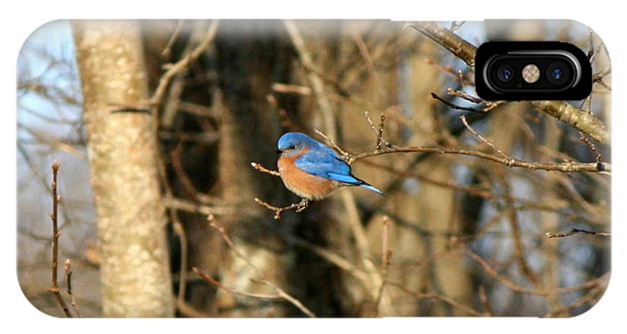 Bird IPhone X Case featuring the photograph March Bluebird by Neal Eslinger