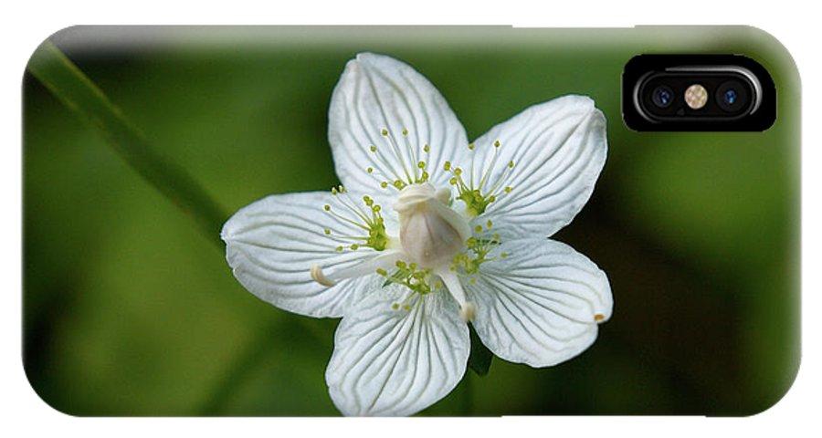Jouko Lehto IPhone X Case featuring the photograph Marsh Grass-of-parnassus by Jouko Lehto