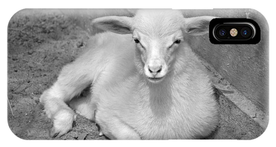 Kid IPhone X Case featuring the photograph Marys Little Lamb... Or Kid In Black And White by Suzanne Gaff