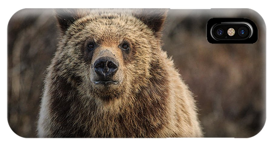 Bear IPhone X Case featuring the photograph Maybe You Should Move by Charlie Choc