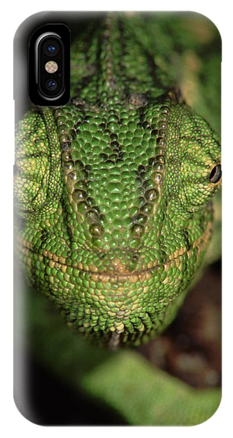 Npl IPhone X Case featuring the photograph Mediterranean Chameleon Chamaeleo by Hans Christoph Kappel