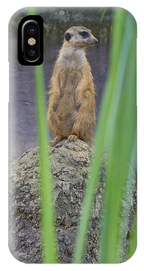A Meerkat IPhone X / XS Case featuring the photograph Meerkat by Nicholas Evans