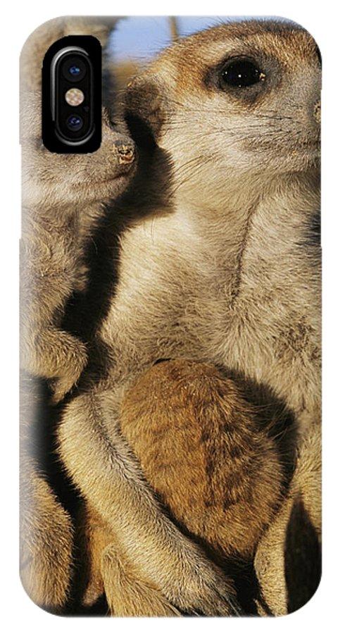 Africa IPhone X / XS Case featuring the photograph Meerkat Pups With Their Caretaker by Mattias Klum