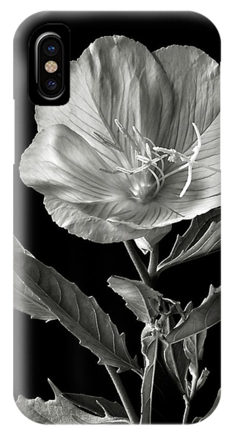 Flower IPhone X Case featuring the photograph Mexican Evening Primrose In Black And White by Endre Balogh