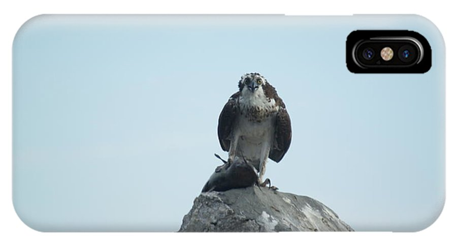 Avian.nature IPhone X Case featuring the photograph Mine Mine Mine by Jack Norton