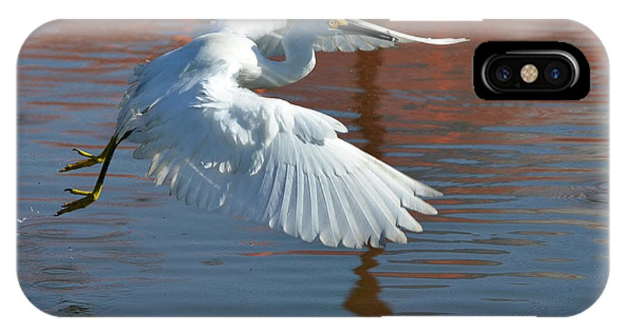 Snowy White Egret IPhone X Case featuring the photograph Mini Snack 2 by Fraida Gutovich