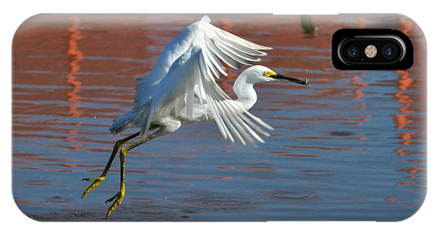 Snowy White Egret IPhone X Case featuring the photograph Mini Snack by Fraida Gutovich