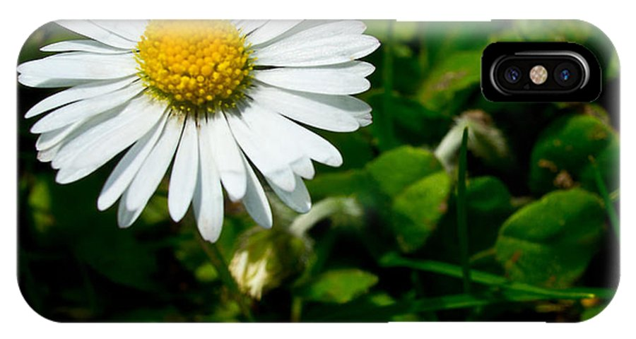 Miniature IPhone X Case featuring the photograph Miniature Daisy In The Grass by Mick Anderson
