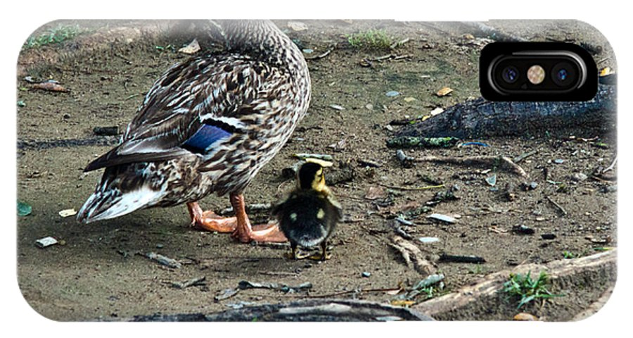Mallard IPhone X Case featuring the photograph Mom And Duckling by Douglas Barnett