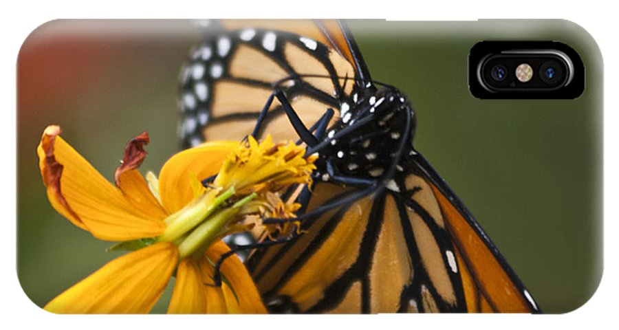 Nature IPhone X Case featuring the photograph Monarch Butterfly  by Heiko Koehrer-Wagner