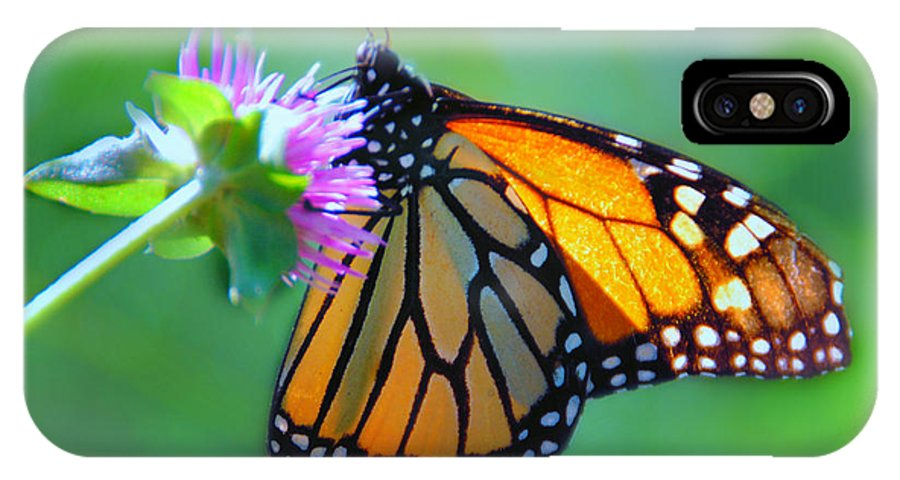 Butterfly IPhone X Case featuring the photograph Monarch Glow by Diane Wood