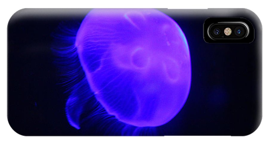 Invertebrate IPhone X Case featuring the photograph Moon Jellyfish by Elizabeth Hart