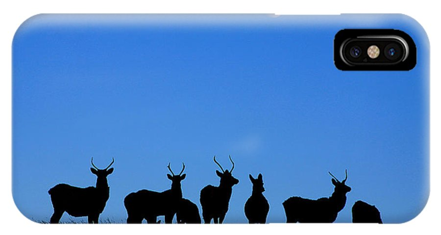 Elk IPhone X Case featuring the photograph Moonlighting by Alyce Taylor