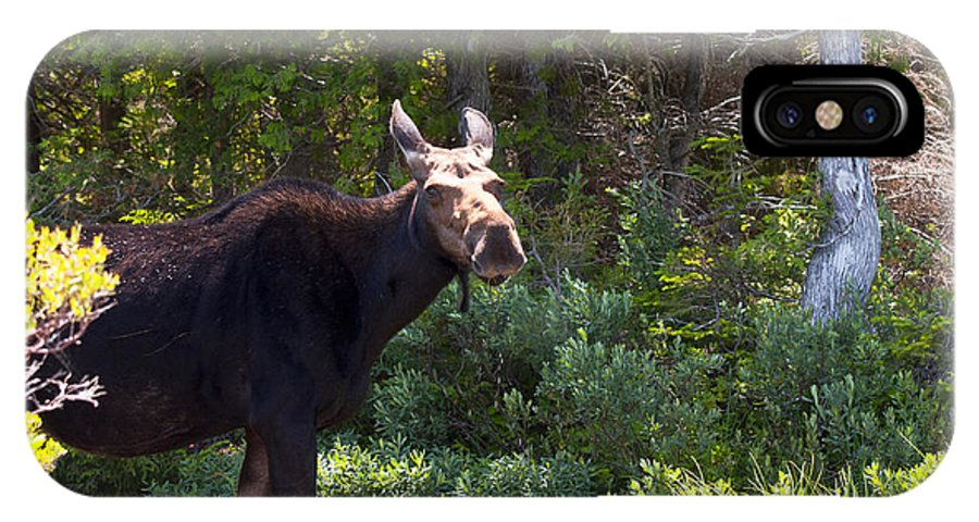 Moose IPhone X Case featuring the photograph Moose Baxter State Park 4 by Glenn Gordon