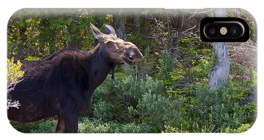 Moose IPhone X Case featuring the photograph Moose Baxter State Park Maine 3 by Glenn Gordon