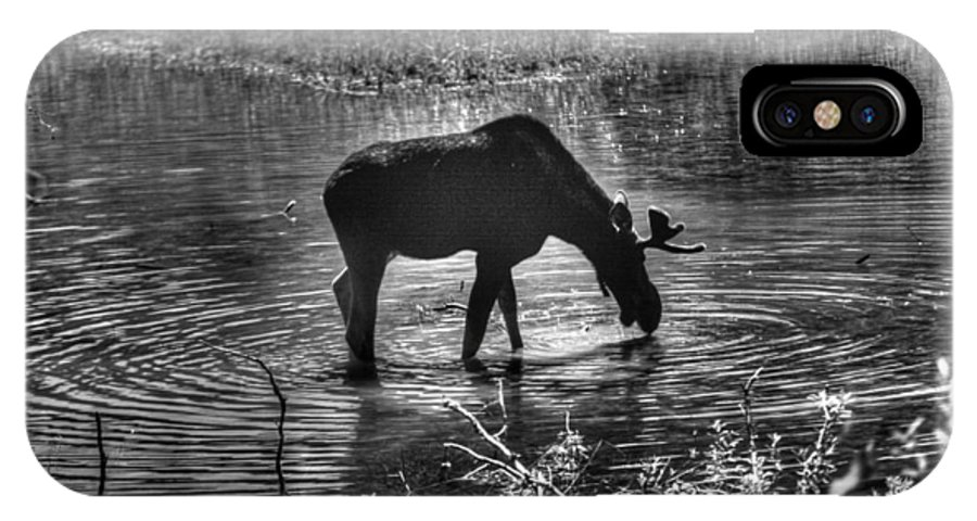 Alces Alces IPhone X Case featuring the photograph Moose Silhouette by One Rude Dawg Orcutt