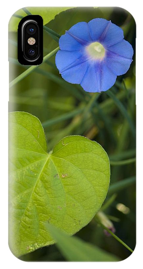 Morning Glory IPhone X Case featuring the photograph Morning Glory (ipomoea Hederacea) by Maria Mosolova