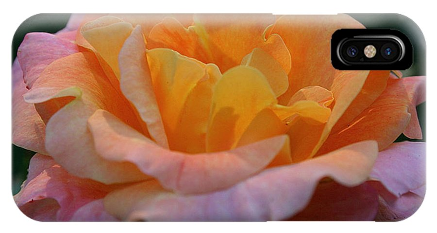 Outdoors IPhone X Case featuring the photograph Morning Glow by Susan Herber
