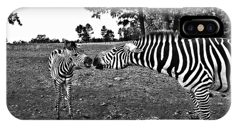 Zebras IPhone X Case featuring the photograph Mother And Child-black And White by Douglas Barnard