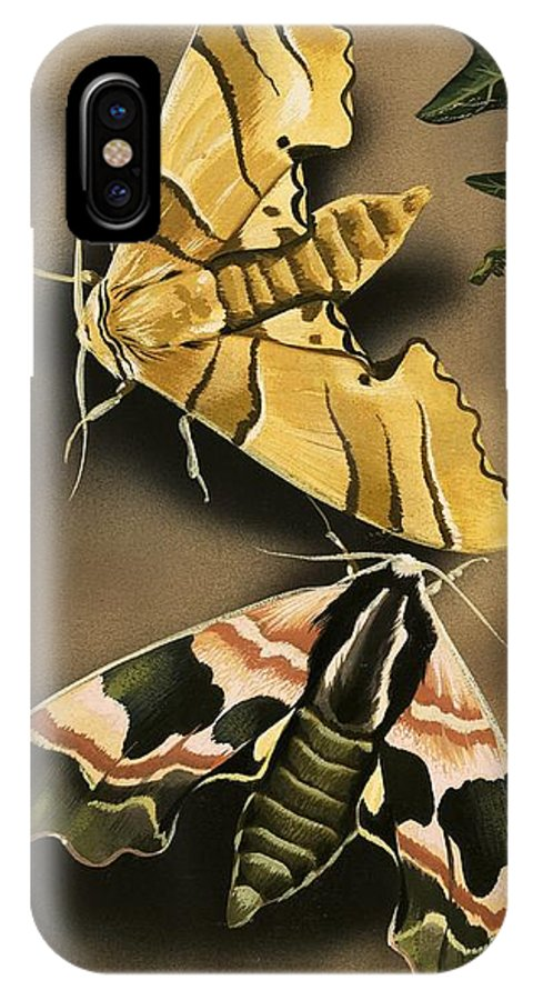 Animals; Nature; Wildlife; Countryside; Butterfly; Moth; Moths IPhone X Case featuring the painting Moths by English School