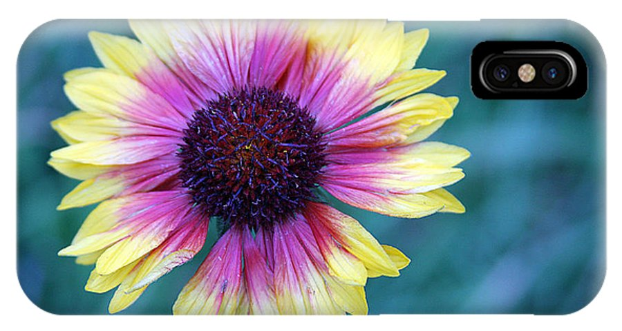 Yellow And Purple Daisy IPhone X Case featuring the photograph Mountain Daisy by Kimberlee Fiedler