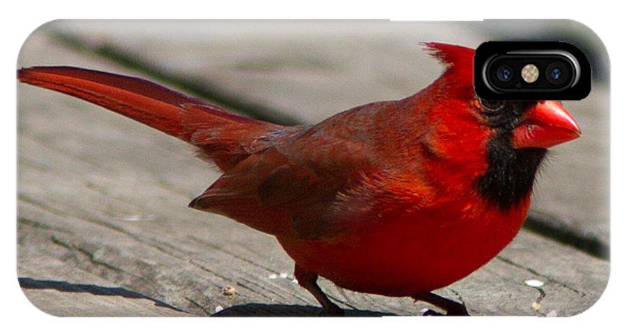 Cardinal IPhone X Case featuring the photograph Mr. Cardinal by David Barker