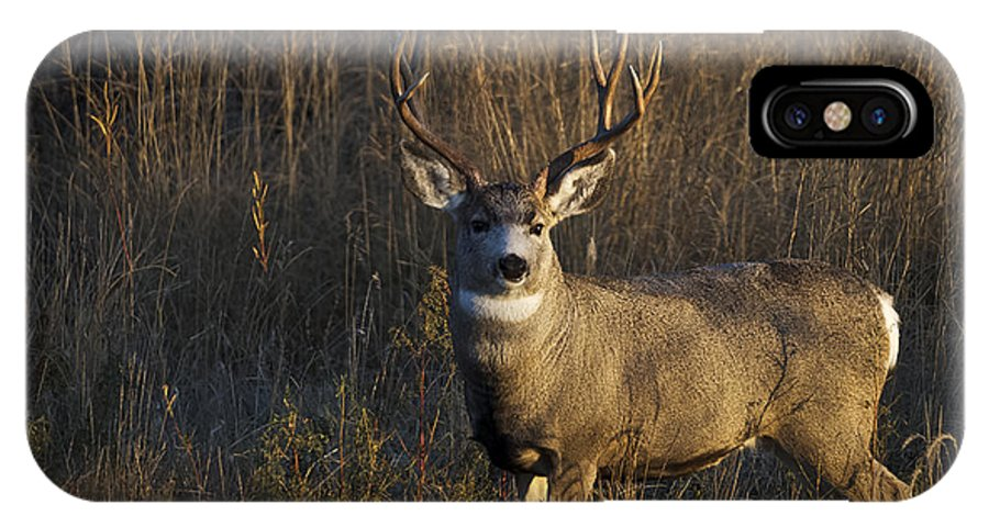 Mule Deer Buck IPhone X / XS Case featuring the photograph Mule Deer Buck by Tim Bjerk