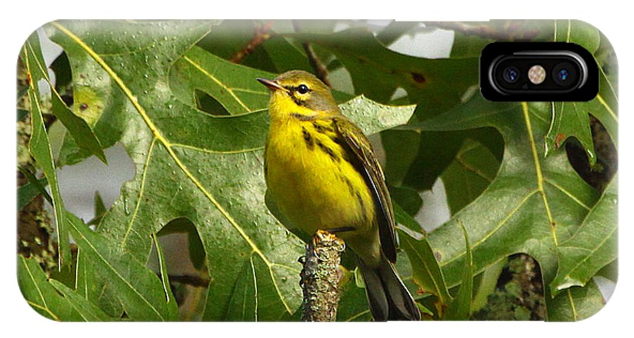 Prairie Warbler IPhone X Case featuring the photograph My Pretty Yellow Belly by Barbara Bowen