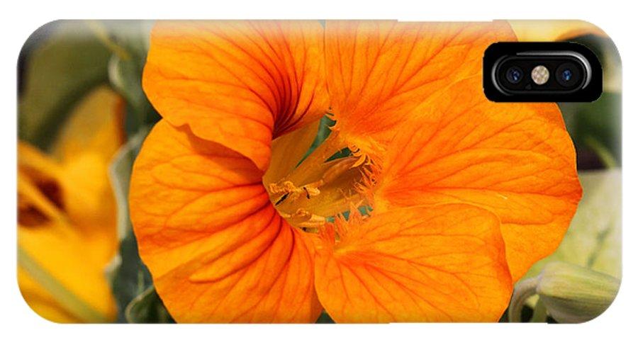 Doug Lloyd IPhone X Case featuring the photograph Nasturtium by Doug Lloyd