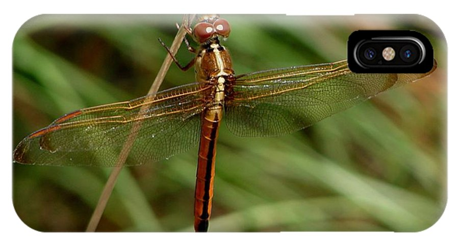 Dragonflies IPhone X / XS Case featuring the photograph Needham's Skimmer IIi by Bruce W Krucke