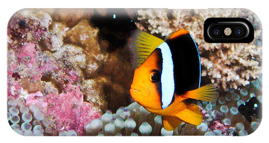 Underwater IPhone X Case featuring the photograph Turning Nemo by Jean Noren