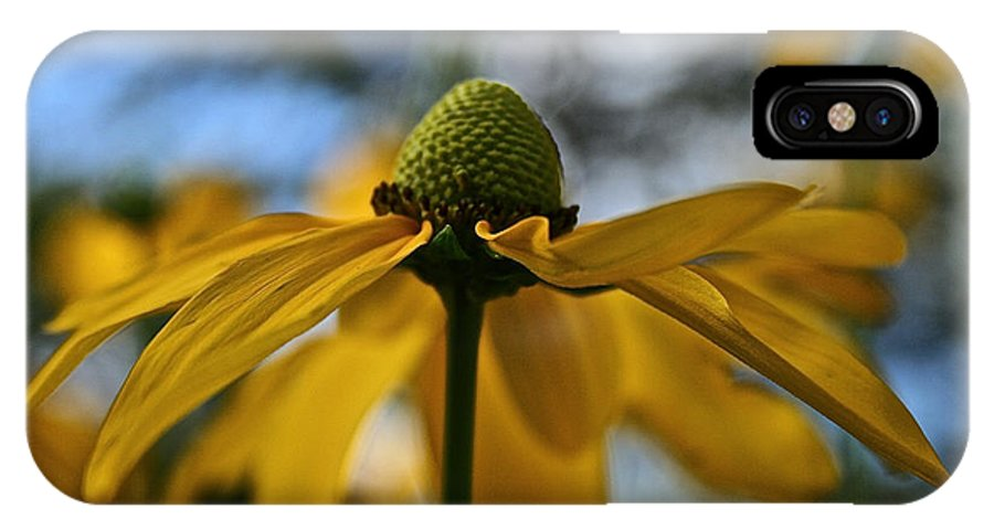 Plant IPhone X Case featuring the photograph New Cone Flower by Susan Herber