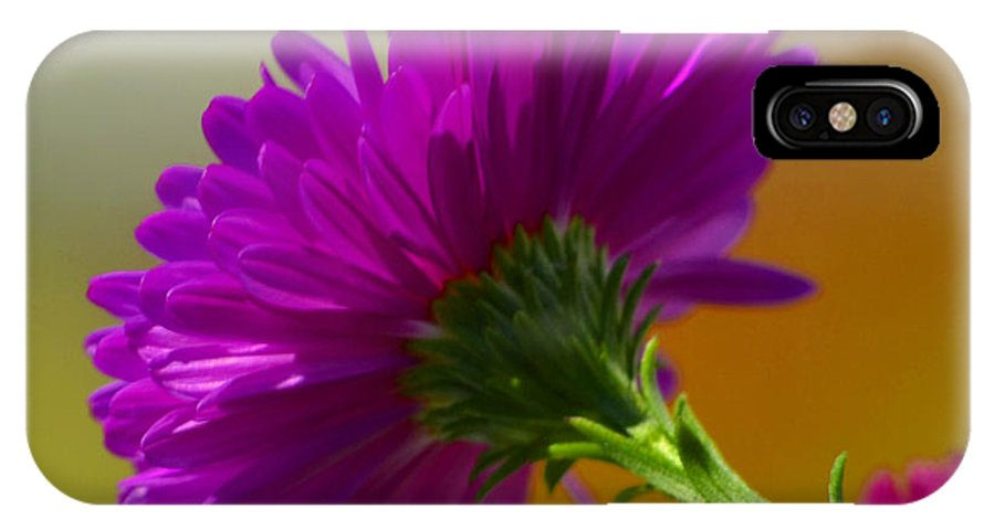 Flower IPhone X Case featuring the photograph No Reason by Melanie Moraga