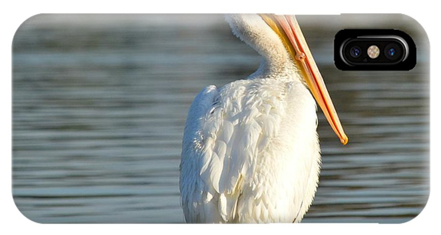 American White Pelican IPhone X Case featuring the photograph Nonchalant by Fraida Gutovich