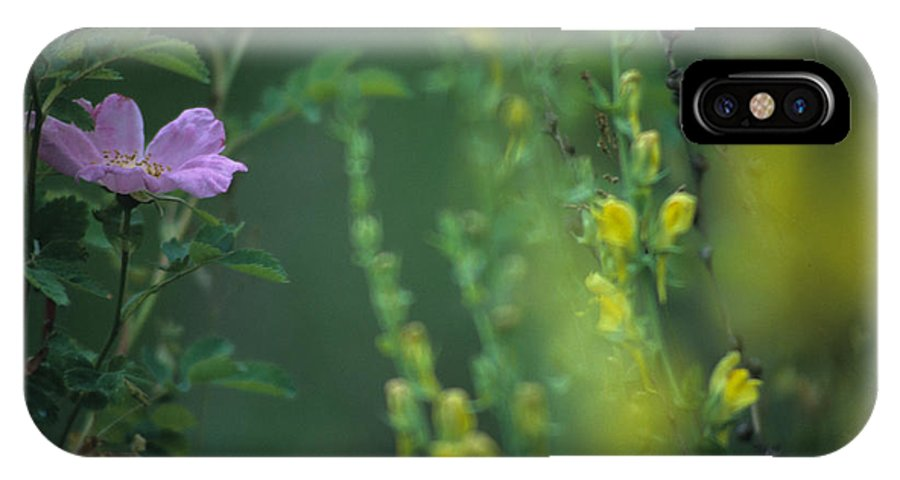 Nootka Rose IPhone X Case featuring the photograph Nootka Rose And Yellow Toadflax by One Rude Dawg Orcutt