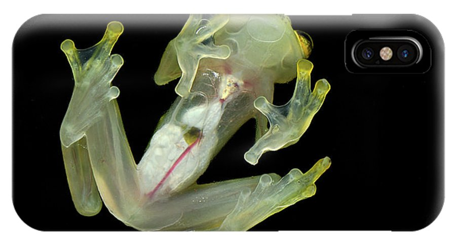 Mp IPhone X Case featuring the photograph Northern Glassfrog Hyalinobatrachium by Thomas Marent