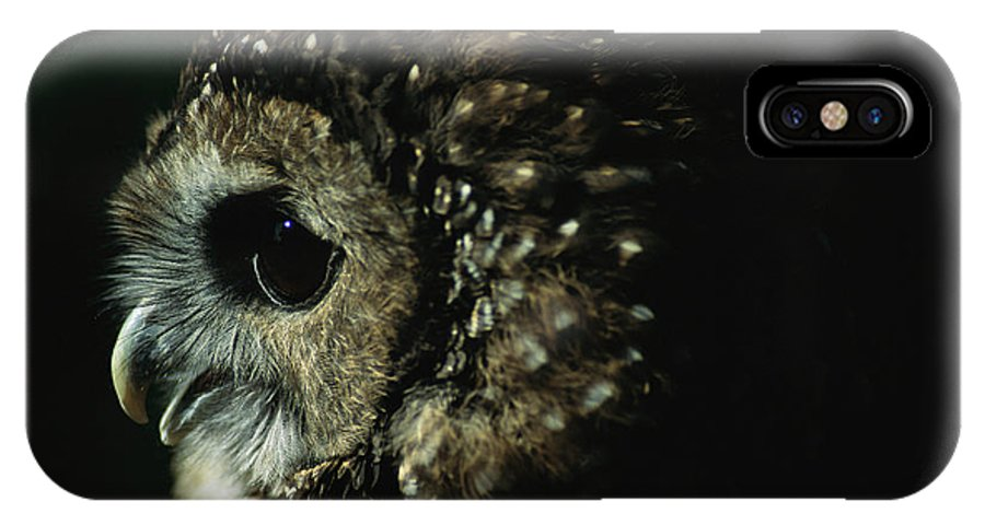 Animals IPhone X / XS Case featuring the photograph Northern Spotted Owl Strix Occidentalis by Joel Sartore