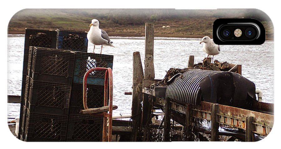 Drakes Bay Oyster Farm IPhone X Case featuring the photograph Nosy Galleries by Hiroko Sakai