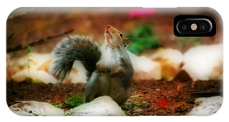 Landscape IPhone X Case featuring the photograph Oh I Ate To Many Nuts by Peggy Franz
