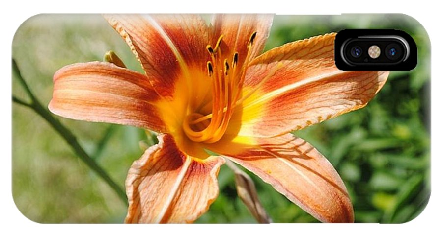 Daylily IPhone X Case featuring the photograph Oklahoma Daylily by Jill Baum